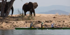Elephants at the river as we pass